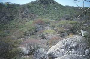 Fort Gomo Kadzamu
